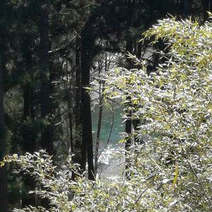 木々の隙間から見える、多摩川の水面青と緑が混じった様な穏やかで静かな冬の水の色合いhttp://ikadamitake.com 営業時間 1月から3月  11~16時4月から12月 11~17時金曜定休(祭日は営業)※むかし鳥、ばくだんは数に限りがございます。1個からお取り置き致します♪Tel.0428-85-8726#むかし鳥 #体験型 #炭鳥ikada #ばくだん #mitake #tokyo #御岳 #御岳山 #御岳山ロックガーデン #武蔵御嶽神社 #御岳神社 #多摩川 #御岳渓谷 #東京アドベンチャーライン #御岳ランチ #奥多摩フィッシングセンター #奥多摩 #日原鍾乳洞 #味玉 #串 #バイク #ロードバイク #カヌー #カヤック #リバーSUP #デッドエンド #ペット可