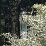 木々の隙間から見える、多摩川の水面青と緑