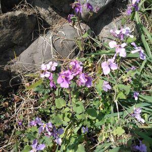 ムラサキハナナとナズナ裏庭も春ですhttp://ikadamitake.com営業時間・1月〜 3月 11〜16時4月〜12月 11〜17時金曜定休(祭日は営業)※むかし鳥、ばくだんは数に限りがございます。1個からお取り置き致します♪Tel.0428-85-8726#むかし鳥 #体験型 #炭鳥ikada #ばくだん #mitake #御岳 #御嶽駅 #御岳山 #御岳山ロックガーデン #武蔵御嶽神社 #御岳神社 #御岳渓谷 #東京アドベンチャーライン #御岳ランチ #奥多摩フィッシングセンター #奥多摩 #日原鍾乳洞 #青梅線五日市線の旅 #imatamagourmet #バイク #ロードバイク #カヌー #カヤック #ラフティング #riversup #デッドエンド #ペット可 #ムラサキハナナ #ナズナ #ぺんぺん草