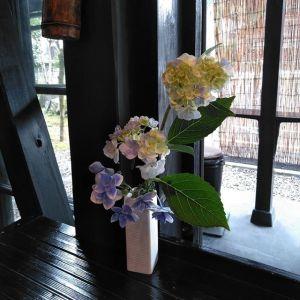 斜めお向かいさんに頂いた #アジサイ斜めお向かいさんには広いお庭があって、アジサイだけでも一体何種類あるのかと思うくらい、沢山の植物を育てておられますhttp://ikadamitake.com営業時 間・4月〜12月 11〜17時1月〜3月 11〜16時金曜定休(祭日は営業)※むかし鳥、ばくだんは数に限りがございます。1個からお取り置き致します♪Tel.0428-85-8726#むかし鳥 #体験型 #炭鳥ikada #ばくだん #mitake #御岳 #御嶽駅 #御岳山 #御岳山ロックガーデン #武蔵御嶽神社 #御岳神社 #御岳渓谷 #御岳ランチ #奥多摩フィッシングセンター #奥多摩 #日原鍾乳洞 #奥多摩湖 #バイク #ロードバイク #サイクリング #カヌー #カヤック #ラフティング #riversup #御岳ボルダー #ペット可 #紫陽花