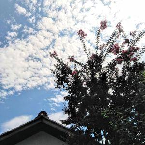 秋の空に、遅咲きの #サルスベリ が咲いていますhttp:/ikadamitake.com営業時間・4月〜12月 11〜17時1月〜3月 11〜16時金曜定休(祭日は営業)※むかし鳥、ばくだんは数に限りがございます。1個からお取り置き致します♪Tel.0428-85-8726#むかし鳥 #体験型 #炭鳥ikada #ばくだん #mitake #御岳 #御嶽駅 #御岳山 #御岳山ロックガーデン #武蔵御嶽神社 #御岳神社 #御岳渓谷 #御岳ランチ #奥多摩フィッシングセンター #奥多摩 #日原鍾乳洞 #奥多摩湖 #バイク #ロードバイク #サイクリング #カヌー #カヤック #ラフティング #riversup #御岳ボルダー #ペット可 #百日紅