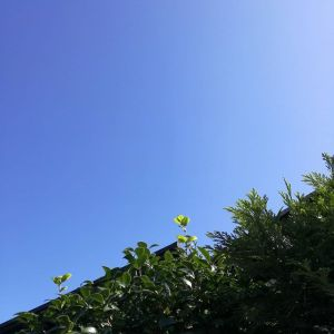 雲一つない秋晴れ️過ごしやすくなって来て毎日寝やすいですよねhttp://ikadamitake.com 営業時間4月から12月 11~17時1月から3月 11~16時金曜定休(祭日は営業)Tel.0428-85-8726#むかし鳥 #体験型 #炭鳥ikada #ばくだん #mitake #御岳 #御岳山 #御岳山ロックガーデン #武蔵御嶽神社 #御岳神社 #御岳渓谷 #御岳ランチ #奥多摩フィッシングセンター #奥多摩 #日原鍾乳洞 #バイク #ロードバイク #サイクリング #カヌー #カヤック #riversup #ラフティング #御岳ボルダー #ペット可 #秋晴れ