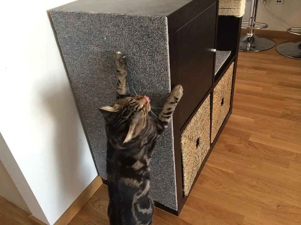 Ideas For Cat Scratching Post