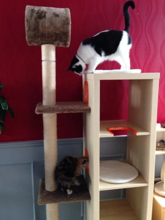 Cat Playground And Scratch Post Ikea Hackers