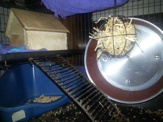 prairie dog wheel (1)