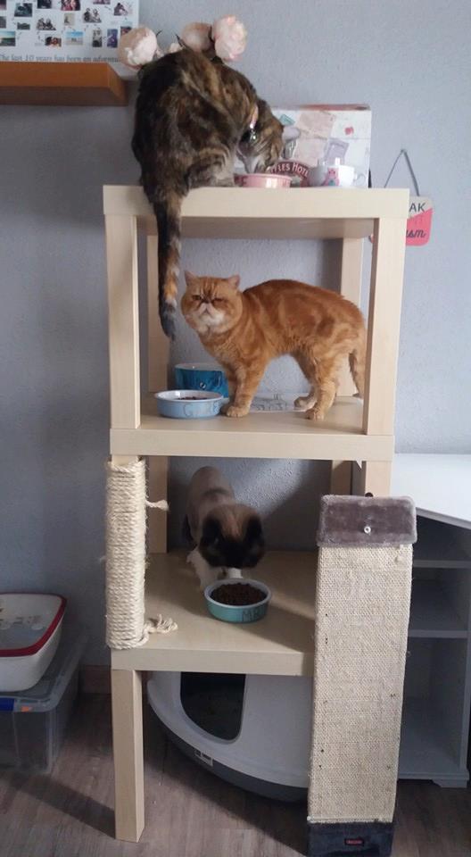 Crazy cat-lady LACK storage