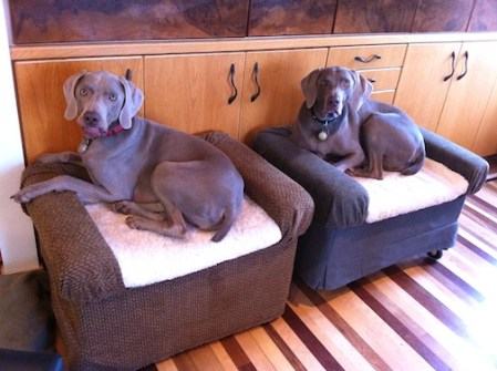 Rolling Dog Beds