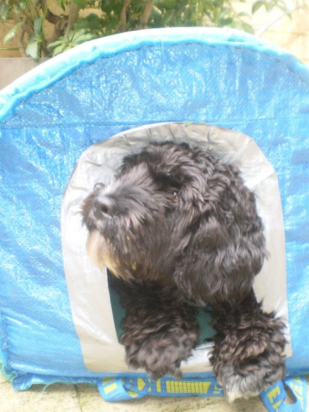 Dog Kennel From An Ikea Bag And Camping Mattress Ikea