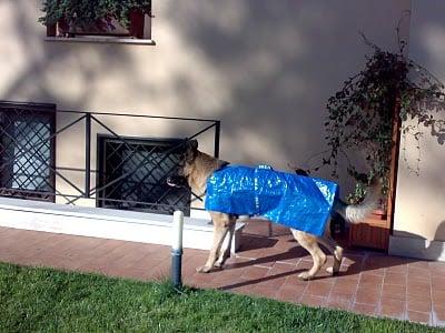 dog raincoat