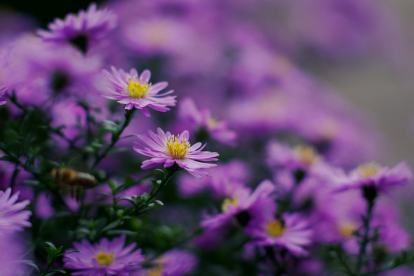 aster_20190929_165018_