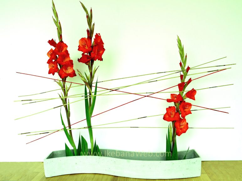 Lines in ikebana arrangements gladiolus and reed lines by Ekaterina Seehaus Sogetsu school of ikebana. ikebanaweb.com