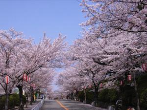 大阪、花見、スポット、2