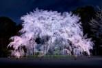 東京で桜の花見ができる人気なスポットをご紹介!