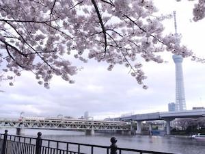 東京、花見、スポット、人気、1
