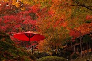 関西 紅葉 スポット ランキング 人気、7