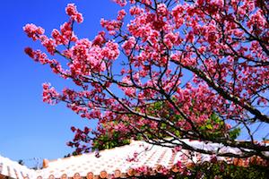 1月 沖縄 服装 気温 旅行 イベント