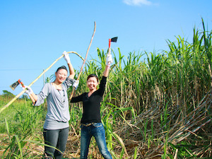 2月 沖縄 旅行 気温 イベント 3