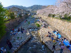 神戸市 桜 名所 穴場  花見 スポット 7