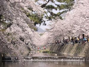 神戸市 桜 名所 穴場  花見 スポット 9