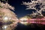 夜桜が綺麗な関東のライトアップスポット!おすすめランキングの紹介!