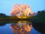 福岡県の桜の名所や穴場は?2019年の花見ができるスポットをご紹介!