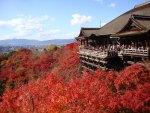 11月は京都府へ旅行!気温や服装、観光におすすめなスポットは?