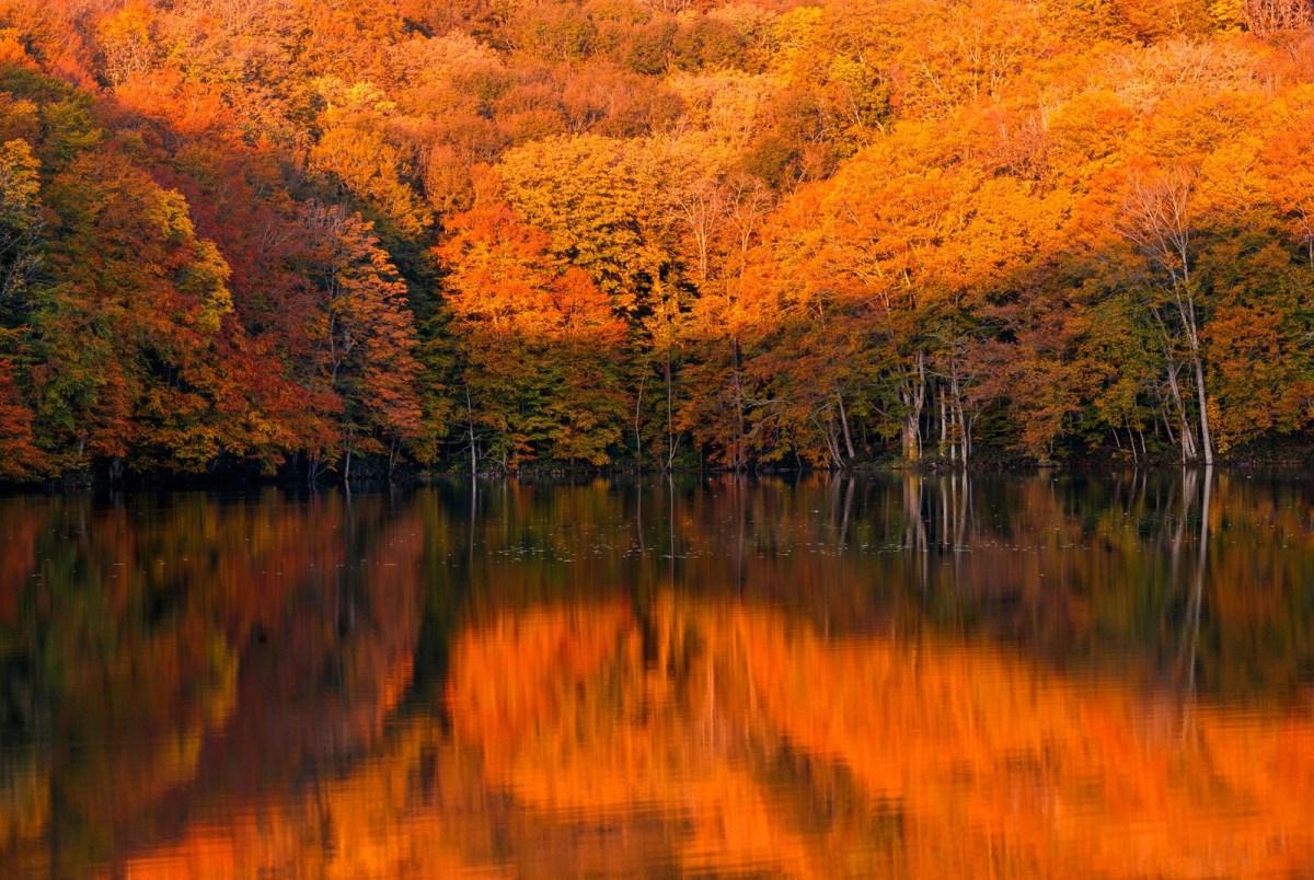 秋といえば?花や旬の食べ物、イベントや行事、歌、記念日とは?