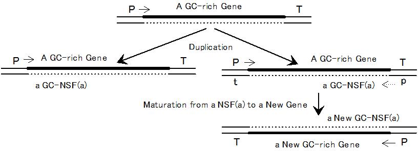 GC-NSF(a) 新規遺伝子生成仮説