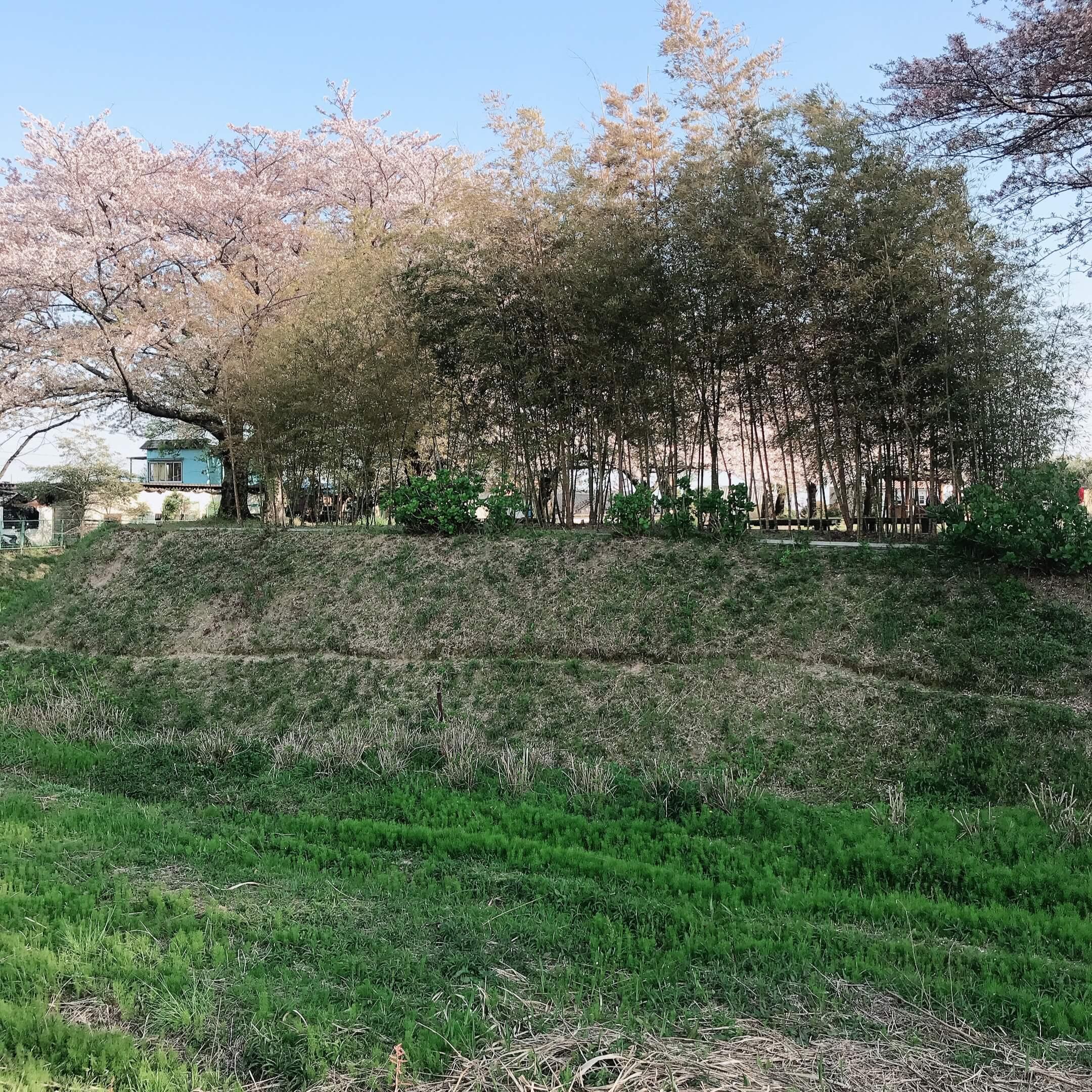 沓掛城趾 桜 駐車場 豊明市