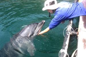 イルカ(トレーナーとコミュニケーションを深めているイルカ)
