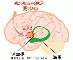 脳内 側坐核