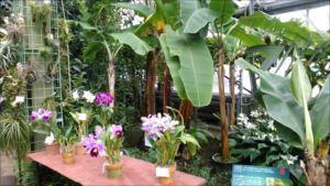 筑波実験植物園バリアフリー情報