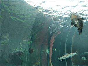 水中トンネルはバリアフリー