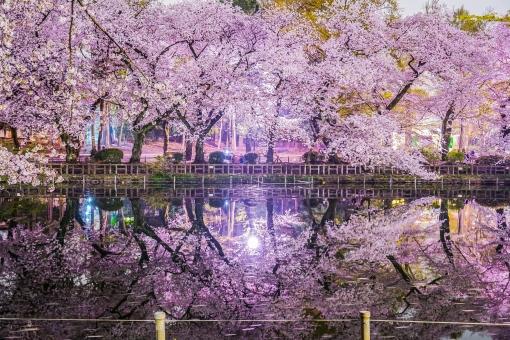 再生した池を楽しむ 吉祥寺井の頭公園 バリアフリールート案内