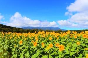 無料の花畑エリアのバリアフリー状況