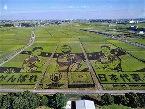 世界最大の田んぼアート
