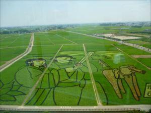 夏に田んぼアートを眺めることができます
