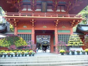 大菊花展」が開催中。