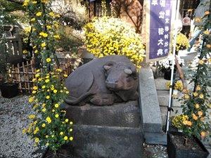 牛天神北野神社の「第19回牛天神菊わらべまつり