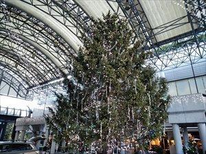 東京都心部のクリスマスツリー