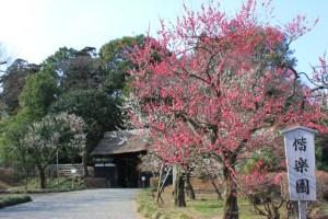 関東の梅の名所