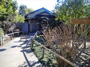 東京の梅林 池上梅園