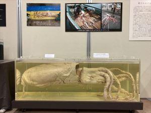 千葉県立海の博物館
