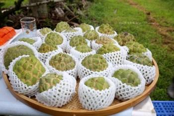 台東好吃釋迦太陽很多 大目釋迦來當小果農享受釋迦採果樂