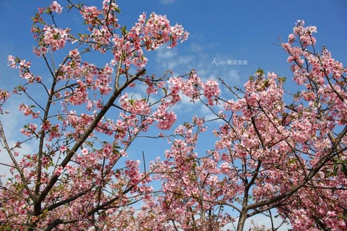 芬園櫻花季 彰化櫻花綻放,春遊芬園花卉園區,還能賞夜櫻,親子一日遊