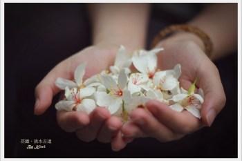 【彰化芬園】幸福手作:挑水古道桐花季(古道巡禮、芬園寶藏寺、139縣道)