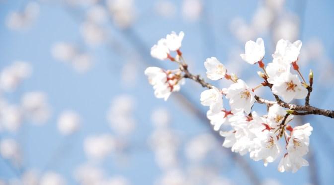 桜と梅の超カンタンな見分け方