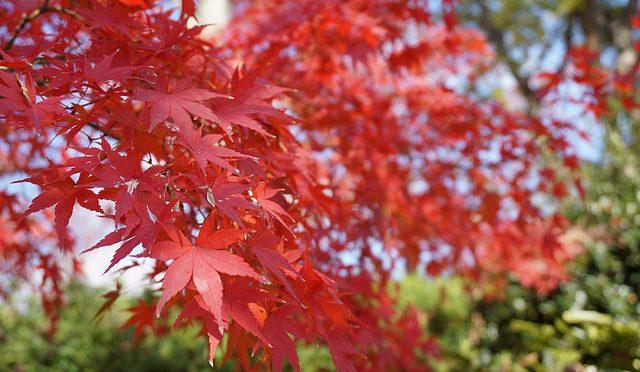 神戸王子動物園の紅葉とα6000