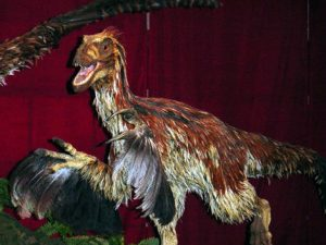 Feathered Deinonychus antirrhopus model at the Royal Ontario Museum. Credit: Aaron Gustafson Copyright: Wikimedia Commons