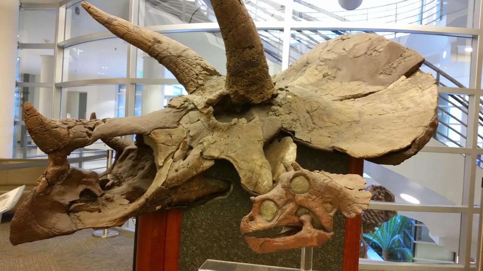 Dino Museums Archives - I Know Dino: The Big Dinosaur Podcast
